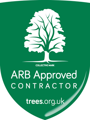 ARB Approved Tree Surgeon Wimborne