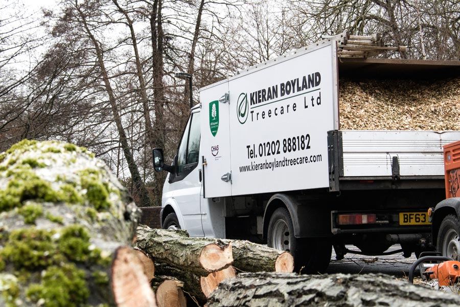 Tree Surgeon Wimborne